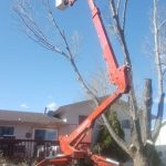 Backyard Bucket tree removal