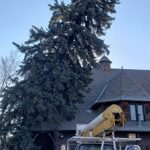Tree leaning on a Church (2)